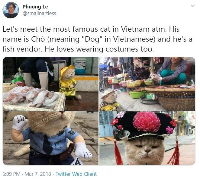 "Community - Phuong Le @smallnartless Let's meet the most famous cat in Vietnam atm. His name is Chó (meaning ""Dog"" in Vietnamese) and he's a fish vendor. He loves wearing costumes too. 5:09 PM · Mar 7, 2018 · Twitter Web Client"