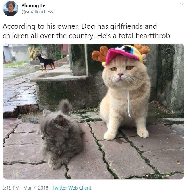 Cat - Phuong Le @smallnartless According to his owner, Dog has girlfriends and children all over the country. He's a total heartthrob 5:15 PM · Mar 7, 2018 · Twitter Web Client >