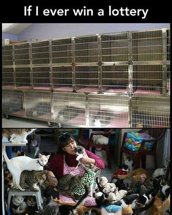 If I ever win a lottery empty cages in a pet shelter and a woman surrounded by a lot of cats