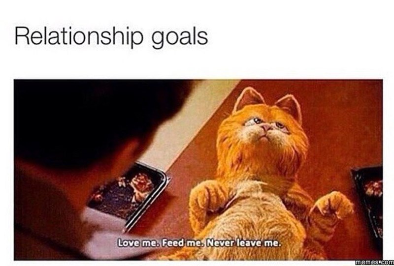 Cat - Cat - Relationship goals Love me. Feed me. Never leave me. memes.com