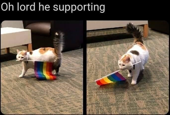 Oh lord he supporting cat carrying a rainbow pride flag in its mouth