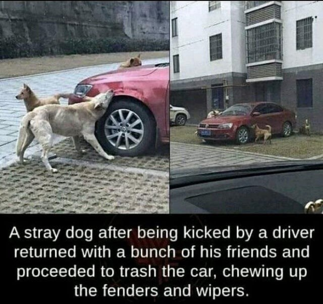 Dog - A stray dog after being kicked by a driver returned with a bunch of his friends and proceeded to trash the car, chewing up the fenders and wipers.