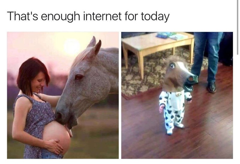 Horse - That's enough internet for today