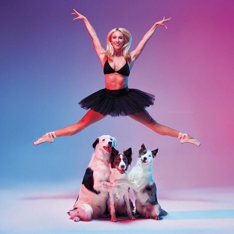 Dancer - DANCERSEDOGS