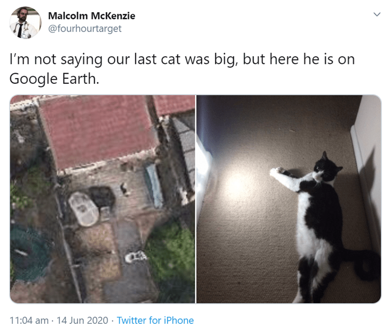 Text - Malcolm McKenzie @fourhourtarget I'm not saying our last cat was big, but here he is on Google Earth. 11:04 am · 14 Jun 2020 · Twitter for iPhone >