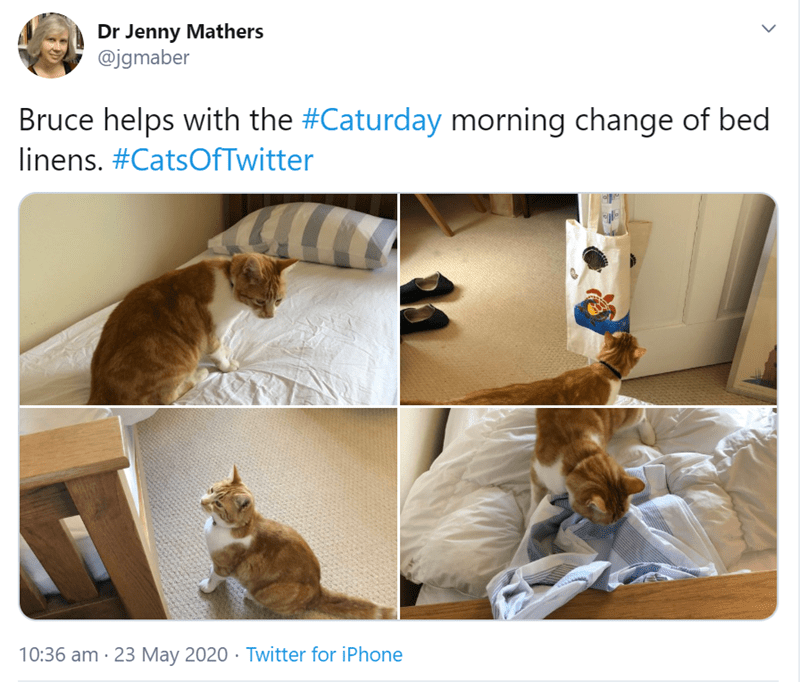 Cat - Dr Jenny Mathers @jgmaber Bruce helps with the #Caturday morning change of bed linens. #CatsOfTwitter 10:36 am · 23 May 2020 · Twitter for iPhone