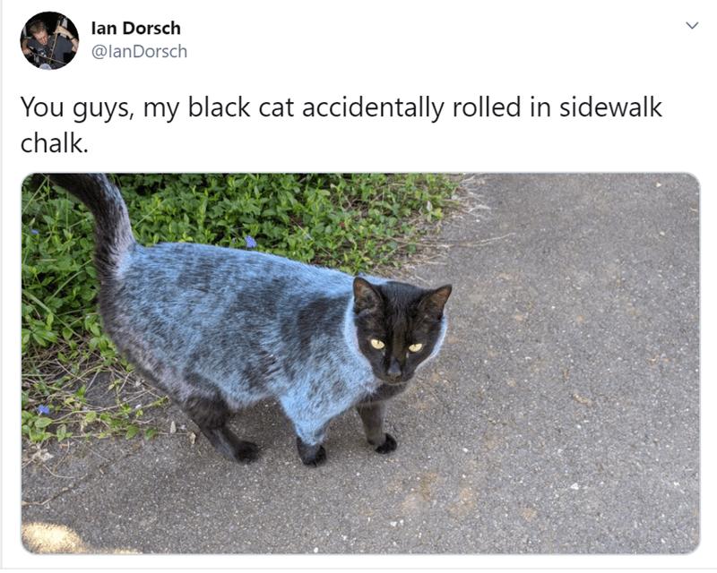 Cat - lan Dorsch @lanDorsch You guys, my black cat accidentally rolled in sidewalk chalk. >