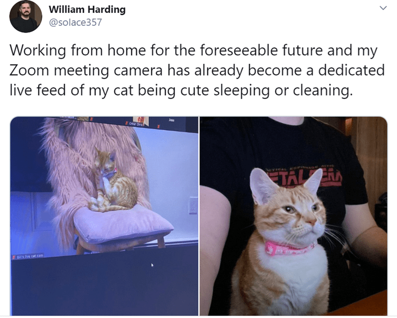 Cat - William Harding @solace357 Working from home for the foreseeable future and my Zoom meeting camera has already become a dedicated live feed of my cat being cute sleeping or cleaning. Jess O Dr ATIC CTICAL EGPILIAGE D's live cat cam >