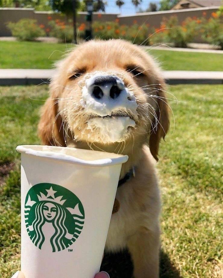 Dog - TM