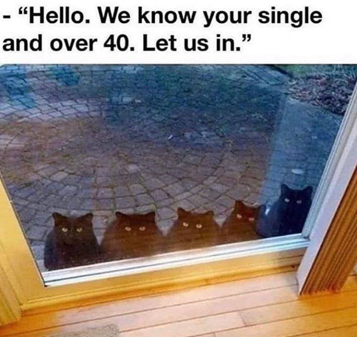we know your single and over 40. Let us in. five black cats sitting in a row outside a glass door