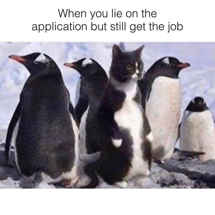 When you lie on the application but still get the job black and white cat standing upright among penguins