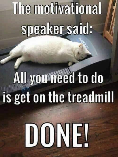 The motivational speaker said: All you need to do is get on the treadmill big chonky white cat sleeping on a treadmill