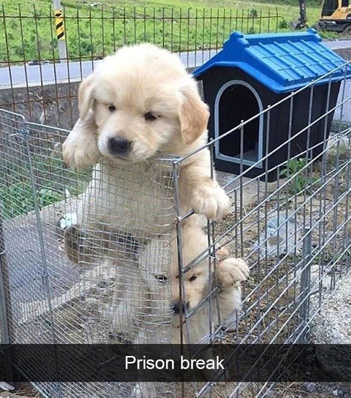 Dog - Prison break