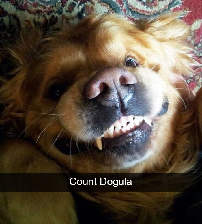 Dog - Count Dogula
