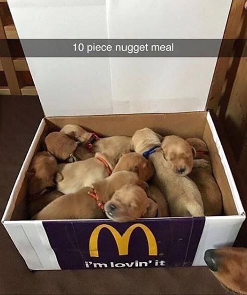 Dog - 10 piece nugget meal i'm lovin' it