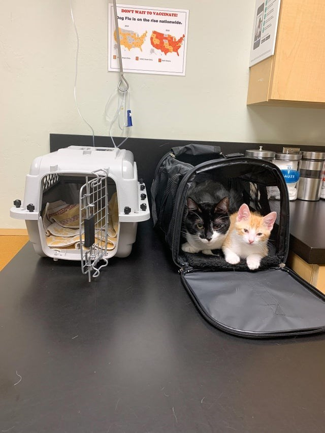 Cat - DON'T WAIT To VACCINATE Dog Flu is on the rise nationwide. AUZE