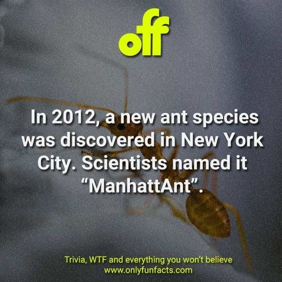"""Text - off In 2012, a new ant species was discovered in New York City. Scientists named it """"ManhattAnt"""". Trivia, WTF and everything you won't believe www.onlyfunfacts.com"""