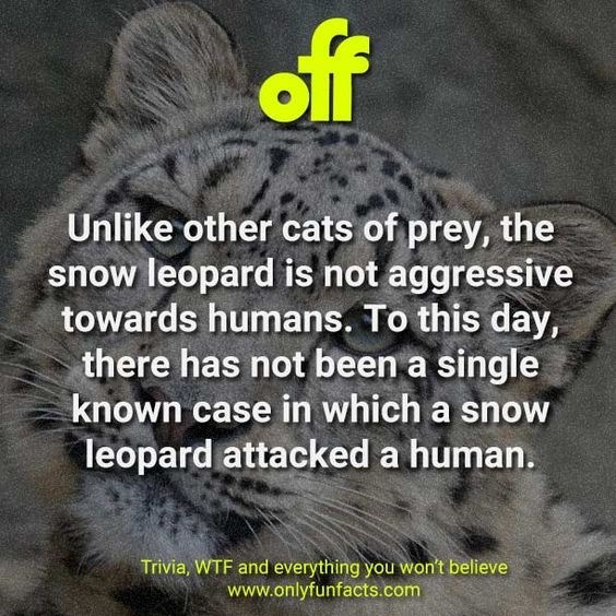 Text - off Unlike other cats of prey, the snow leopard is not aggressive towards humans. To this day, there has not been a single known case in which a snow leopard attacked a human. Trivia, WTF and everything you won't believe www.onlyfunfacts.com