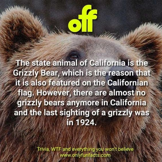 Brown bear - off The state animal of California is the Grizzly Bear, which is the reason that it is also featured on the Californian flag. However, there are almost no grizzly bears anymore in California and the last sighting of a grizzly was 1924ח1 Trivia, WTF and everything you won't believe www.onlyfunfacts.com