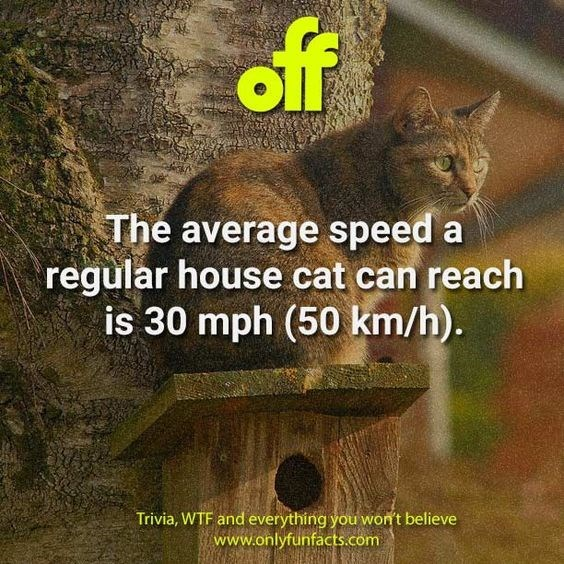 Wildlife - off The average speed a regular house cat can reach is 30 mph (50 km/h). Trivia, WTF and everything you won't believe www.onlyfunfacts.com
