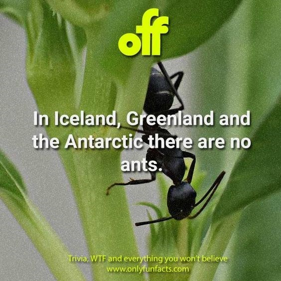 Insect - off In Iceland, Greenland and the Antarctic there are no ants. Trivia, WTF and everything you won't believe www.onlyfunfacts.com