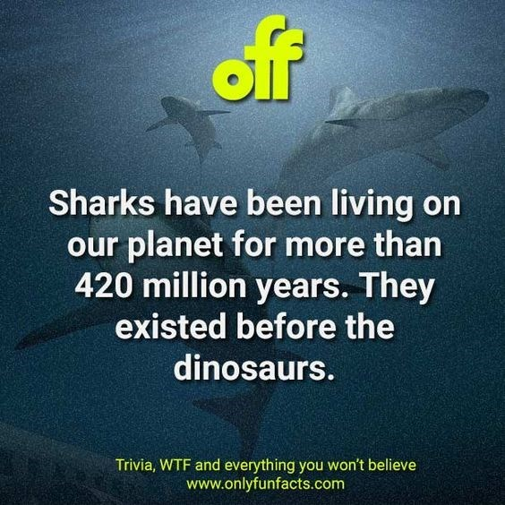Text - off Sharks have been living on our planet for more than 420 million years. They existed before the dinosaurs. Trivia, WTF and everything you won't believe www.onlyfunfacts.com