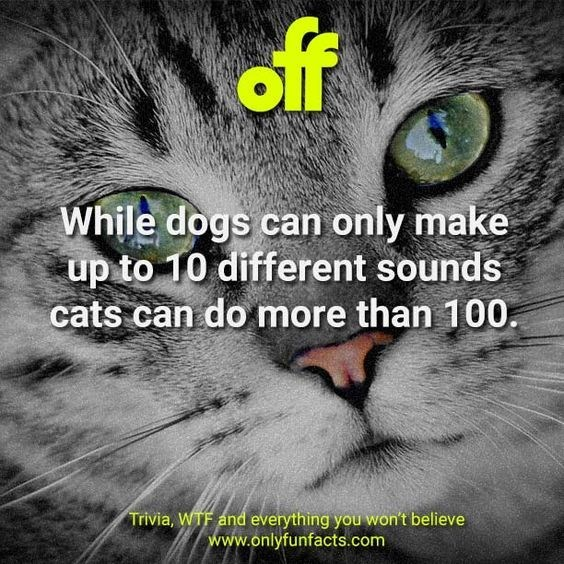 Cat - of While dogs can only make up to 10 different sounds cats can do more than 100. Trivia, WTF and everything you won't believe www.onlyfunfacts.com