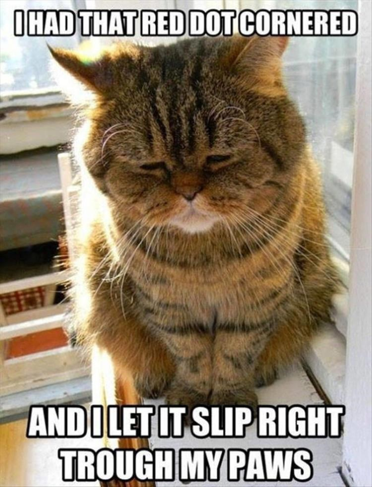 I HAD THAT RED DOT CORNERED AND I IT SLIP RIGHT TROUGH MY PAWS cat looking disappointed