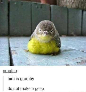 Bird - omgtsn: birb is grumby do not make a peep