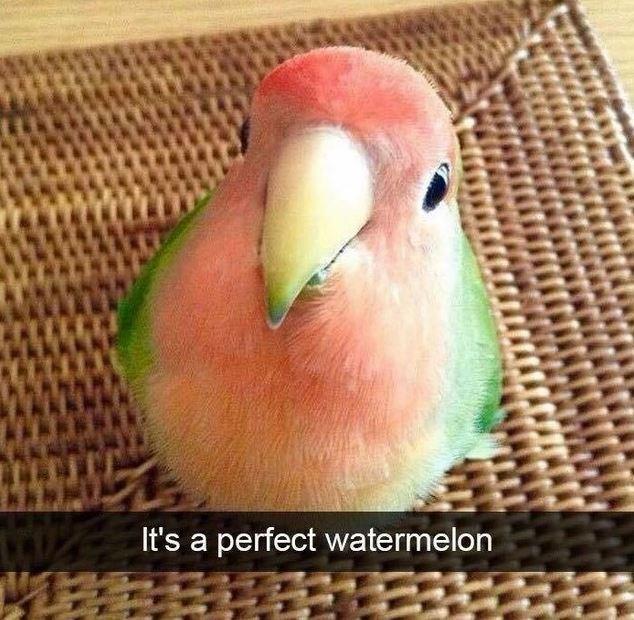 Bird - It's a perfect watermelon