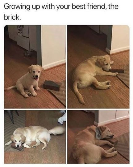 Dog - Growing up with your best friend, the brick.