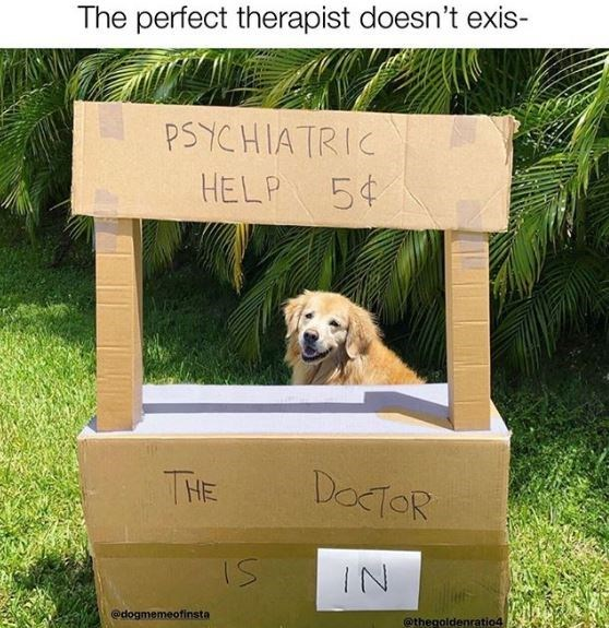 Dog - The perfect therapist doesn't exis- PSYCHIATRIC HELP 5¢ THE DOCTOR IN @dogmemeofinsta @thegoldenratio4