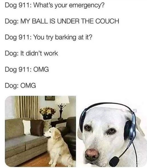 Dog - Dog 911: What's your emergency? Dog: MY BALL IS UNDER THE COUCH Dog 911: You try barking at it? Dog: It didn't work Dog 911: OMG Dog: OMG