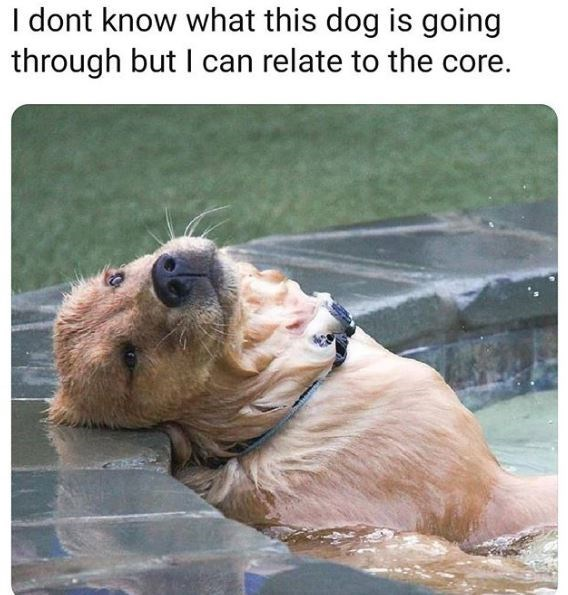 Dog - I dont know what this dog is going through but I can relate to the core.