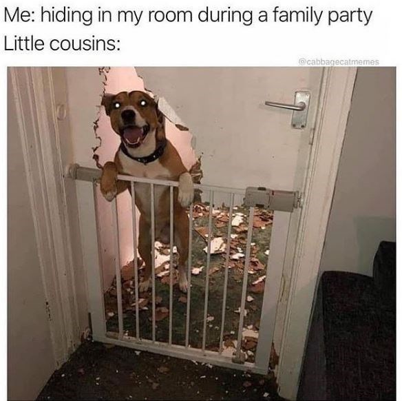 Product - Me: hiding in my room during a family party Little cousins: @cabbagecatmemes