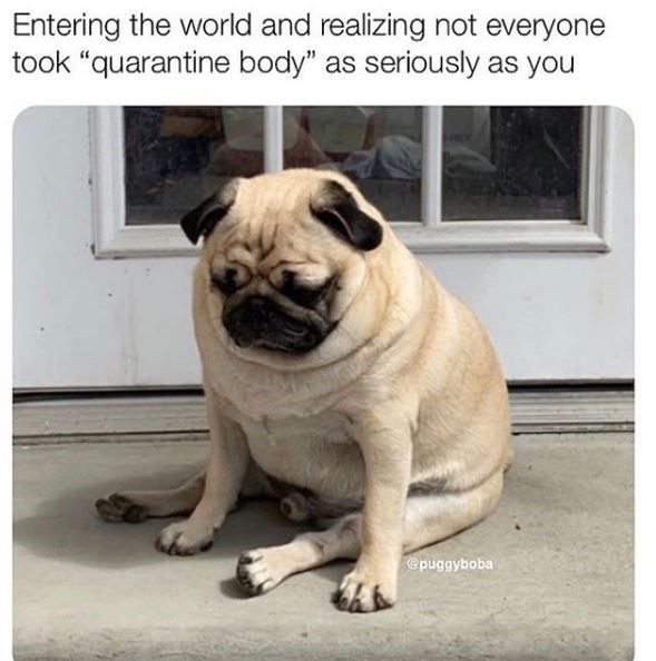 """Pug - Entering the world and realizing not everyone took """"quarantine body"""" as seriously as you @puggyboba"""