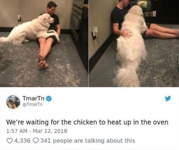 Shoulder - TmarTn @TmarTn We're waiting for the chicken to heat up in the oven 1:57 AM - Mar 12, 2018 O 4,336 Q 341 people are talking about this