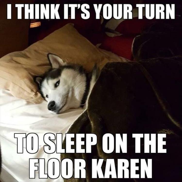Mammal - I THINK IT'S YOUR TURN TO SLEEP ON THE FLOOR KAREN