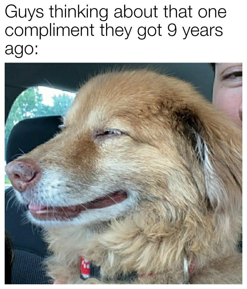 Dog - Guys thinking about that one compliment they got 9 years ago: