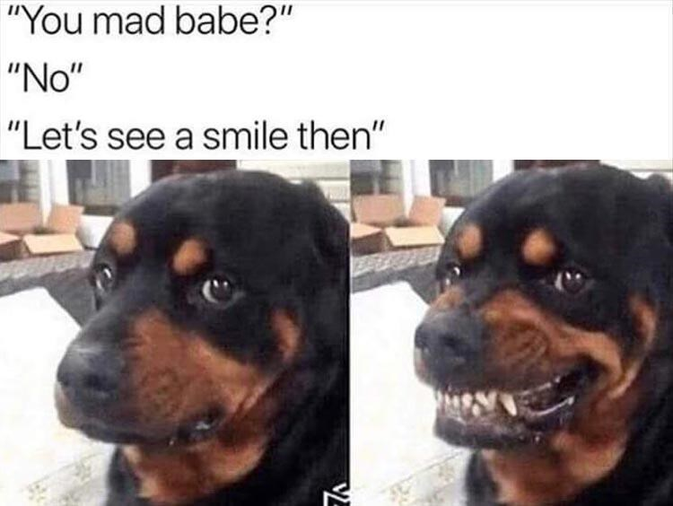 """Dog - """"You mad babe?"""" """"No"""" """"Let's see a smile then"""" VE"""