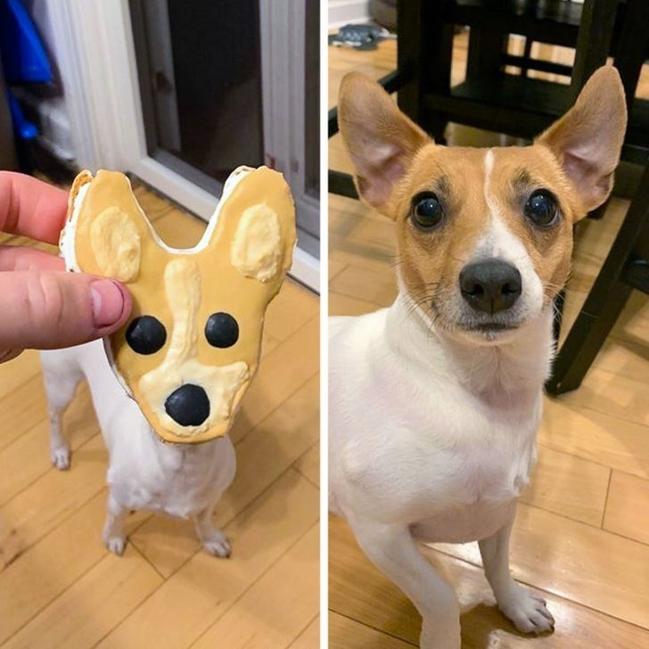 Food - Dog
