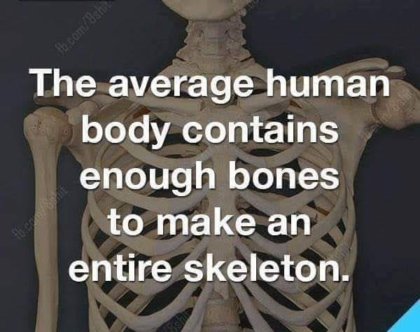 Shoulder - b com/8sh The average human body contains enough bones to make an entire skeleton.