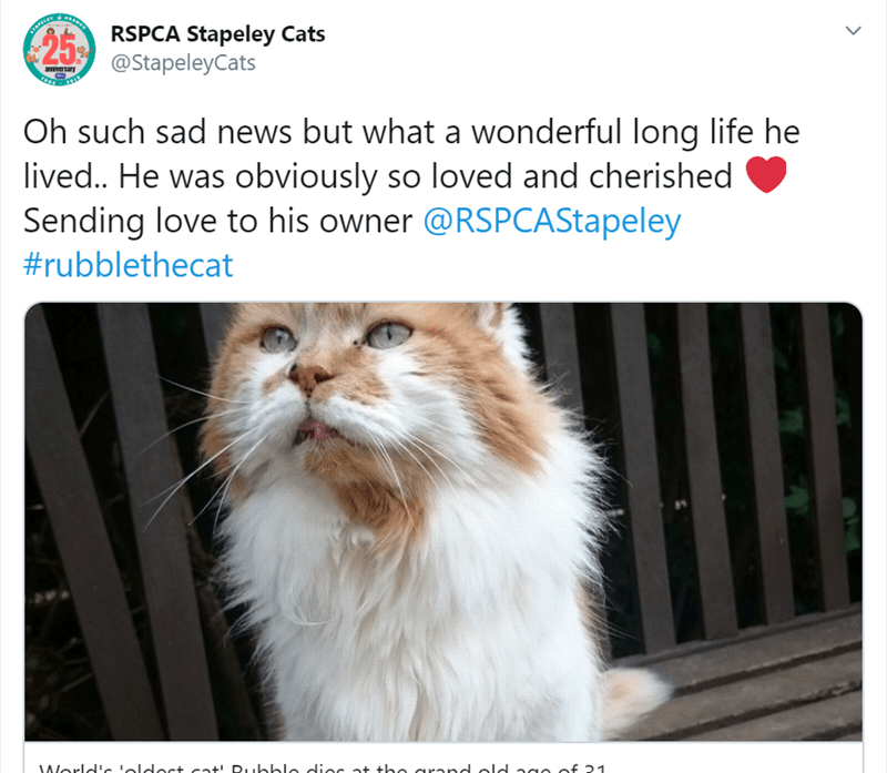 Cat - 25 RSPCA Stapeley Cats @StapeleyCats amiversary Oh such sad news but what a wonderful long life he lived.. He was obviously so loved and cherished Sending love to his owner @RSPCAStapeley #rubblethecat World!cloldect cat! Dubble diec at the arand olo ag0 of 21 >