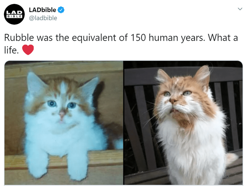 Cat - LADbible LAD BIBLE @ladbible Rubble was the equivalent of 150 human years. What a life.
