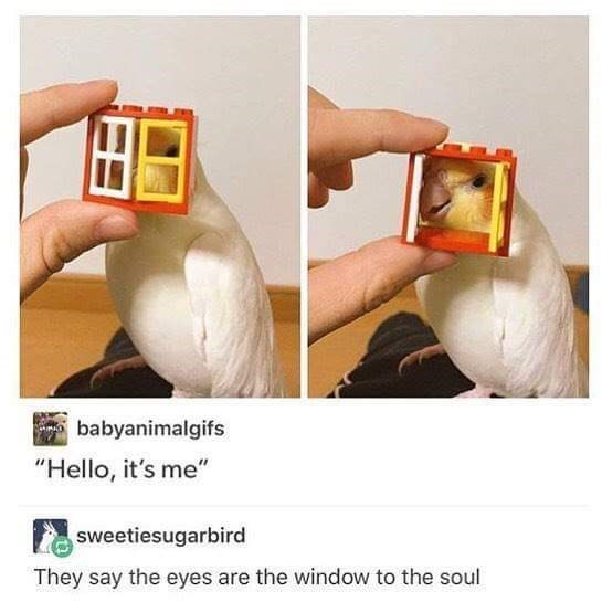 "Product - babyanimalgifs ""Hello, it's me"" sweetiesugarbird They say the eyes are the window to the soul"