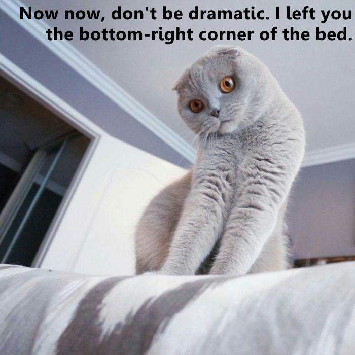 Now now, don't be dramatic. I left you the bottom-right corner of the bed. cute cat looking down from a bed