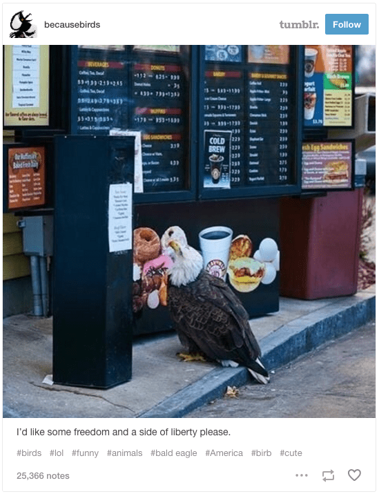 Advertising - becausebirds tumblr. Follow VRAGES DONTS 112-21- m 229 Suc C 239 17-1n 139 230 COLD 22 BREW 22 220 I'd like some freedom and a side of liberty please. #birds #lol #funny #animals #bald eagle #America #birb #cute 25,366 notes ...