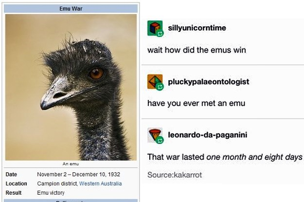Bird - Emu War sillyunicorntime wait how did the emus win pluckypalaeontologist have you ever met an emu leonardo-da-paganini That war lasted one month and eight days An emu Date November 2 - December 10, 1932 Source:kakarrot Location Campion district, Western Australia Result Emu victory