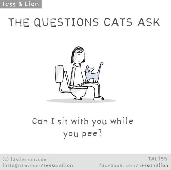 Text - Tess & Lion THE QUESTIONS CATS ASK Can I sit with you while you pee? (c) lastlemon.com instagram.co m/ tessandlion TAL155 facebook.com/ tessandlion