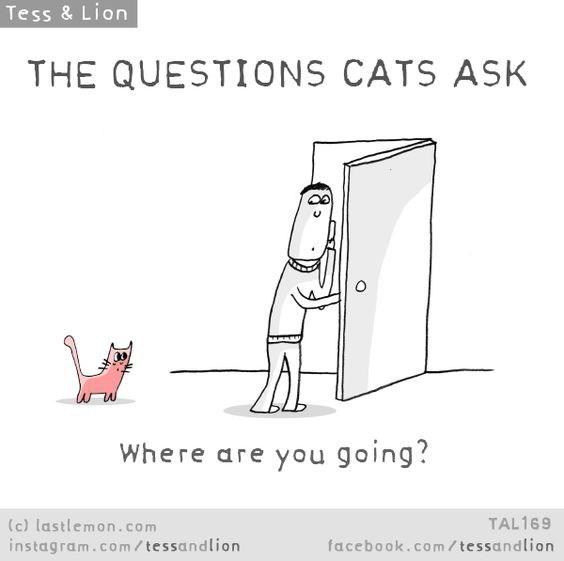 Cartoon - Tess & Lion THE QUESTIONS CATS ASK Where are you going? (c) lastlemon.com instagram.co m/ tessandlion TAL169 facebook.com / tessandlion